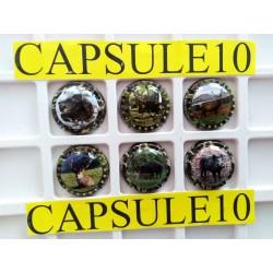 CAPSULES DE CHAPAGNE BRUNO...