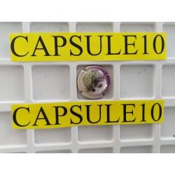 CAPSULES DE CHAMPAGNE BULLE...